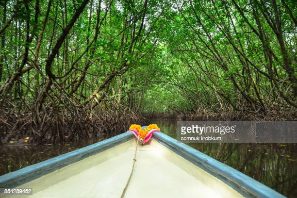 Travel in mangrove forest