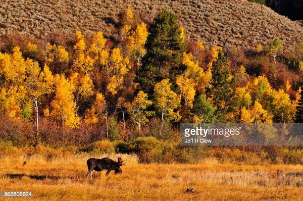 Travel View in Wyoming in Autumn