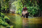 Traveler riding on elephants Trekking in Thailand