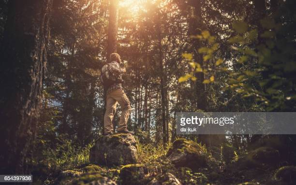 Traveler walking alone in the forest at sunset