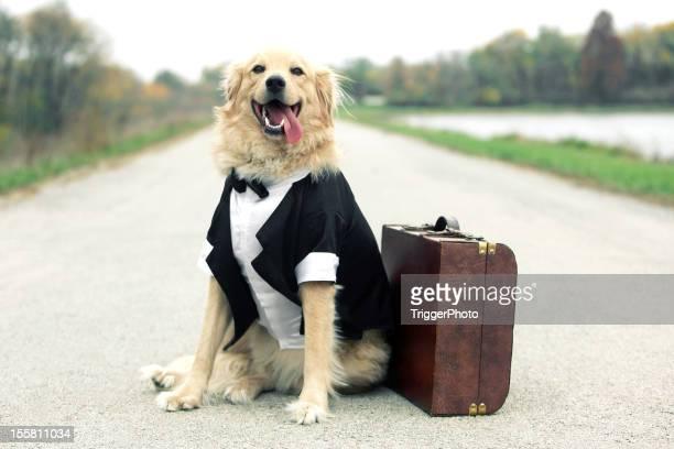Traveling Tuxedo Dog