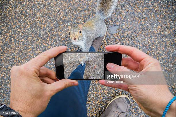 Traveller man taking pictures with smartphone from personal point of view of his legs with squirrels in the London parks.