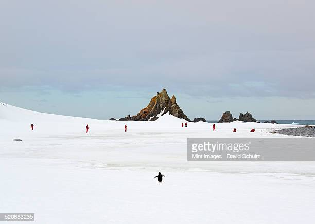 Travellers in bright orange waterproofs observing and photographing the scenery and wildlife on an Antarctic island.