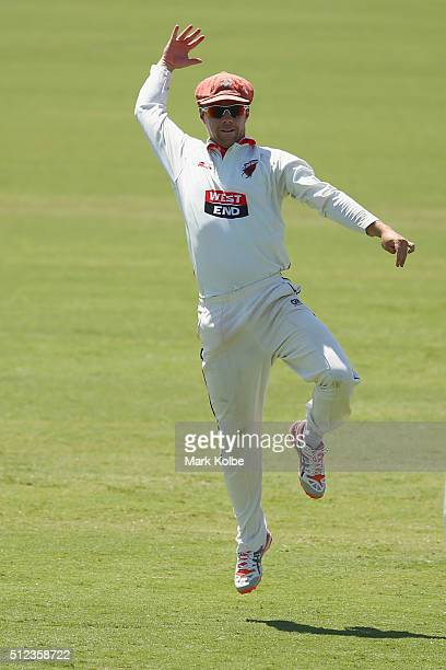 Travis Head of the Redbacks celebrates taking the catch t dismiss Nic Maddinson of the Blues during day two of the Sheffield Shield match between New...