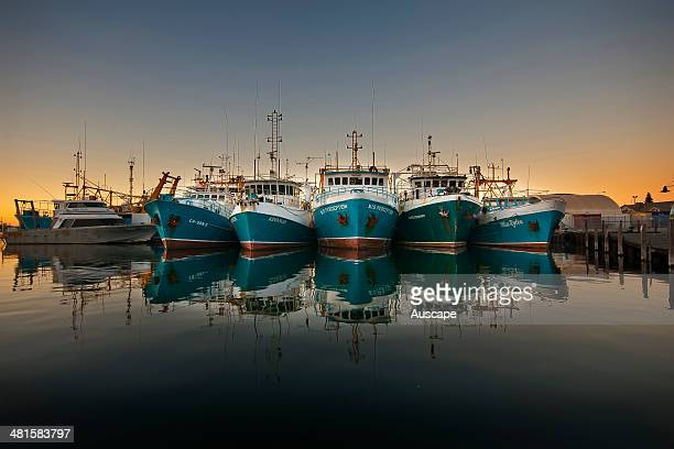 Trawlers in the Fishing Boat Harbour the harbour is home not only to the fishing fleet with all its activities and passing parades but to a wide...