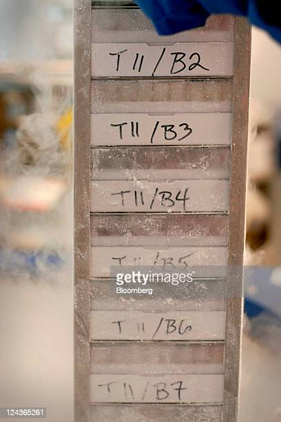 A tray of stored Tcells is pulled from a liquid nitrogen vessel in Dr Bruce Levine's Clinical Vaccine Production Facility at the University of...