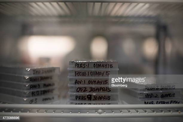 Trays of avian influenza test samples sit in a passthrough refrigerator between rooms in the realtime analytical diagnostics lab at the Iowa State...