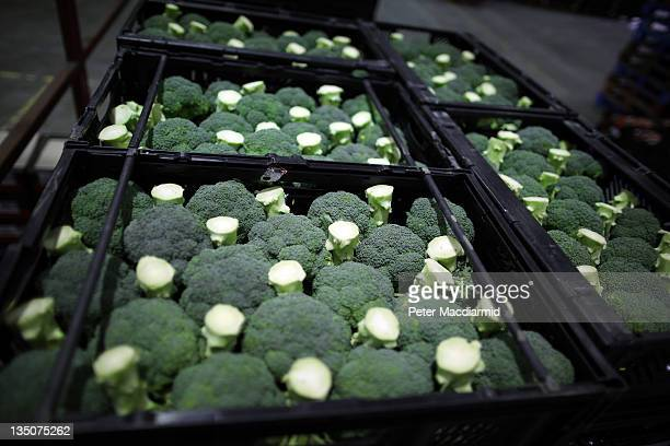 Trays of broccoli await collection from Sainsbury's Waltham Point distribution depot on December 6 2011 in Waltham Abbey England The depot is the...