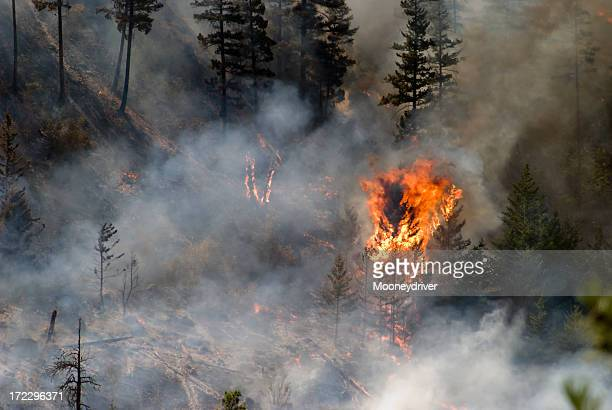 Tree ablaze in forest fire with smoke and charred trees