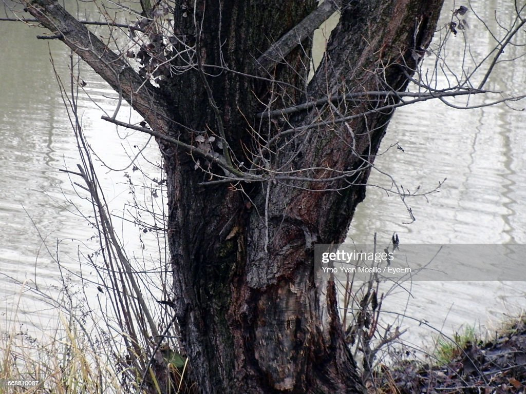 Tree Against River : Stock-Foto