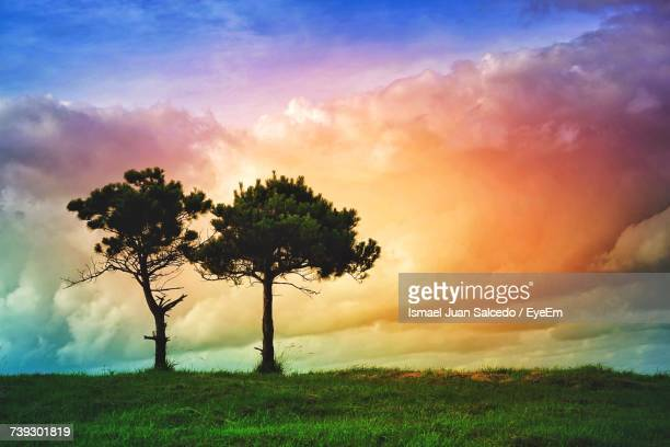 Tree Against Sky During Sunset
