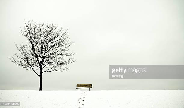 Baum und Bank im Winter
