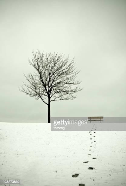 Baum und Bank im Winter mit Gehweg