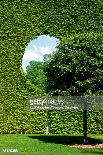 Tree and ivy-covered wall
