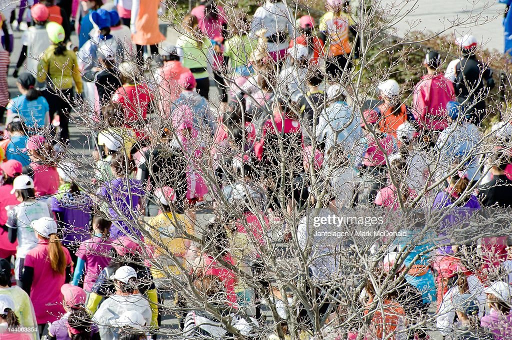 Tree and marathon runners : Stock Photo