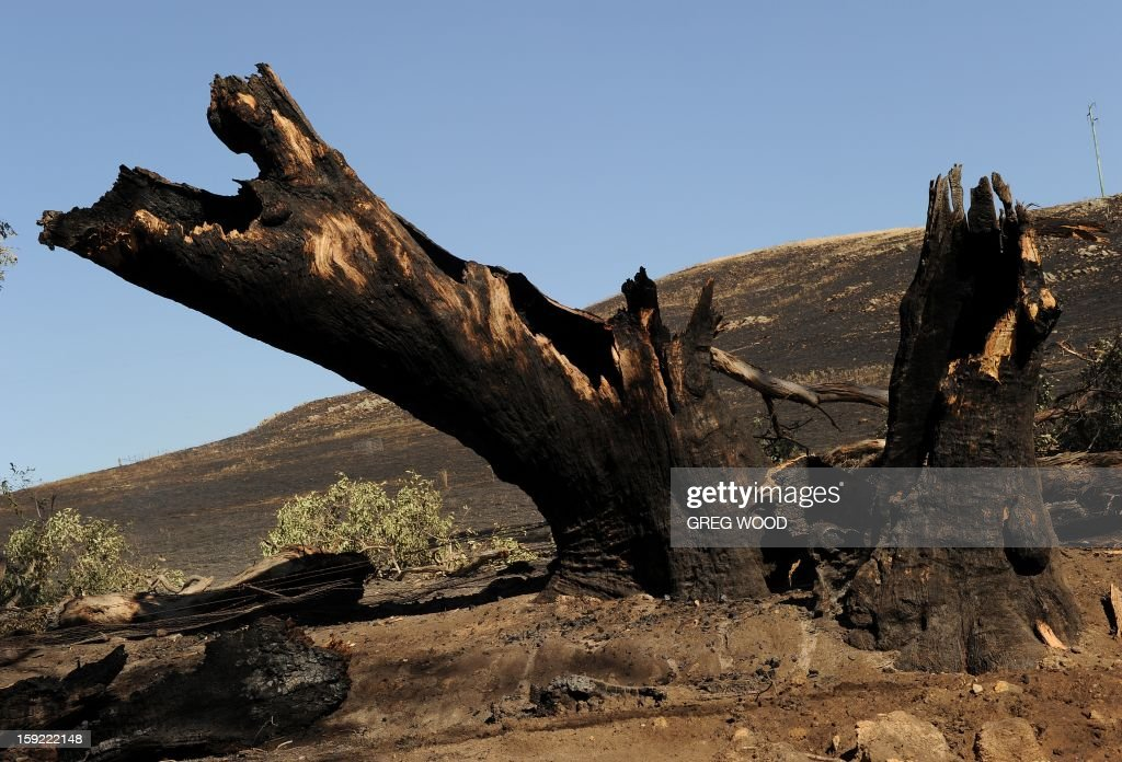 A tree and paddock blackened by a recent bushfire are shown near Bookham, a small village in the Yass Shire in the southern region of Australia's New South Wales state, on January 10, 2013. Fires have been raging across Australia for nearly a week and while many have been contained, 126 are still burning and at least 15 remain out of control in the country's most populous state, New South Wales. AFP PHOTO / Greg WOOD