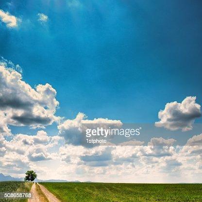 tree and path : Stock Photo