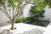 Tree and pool in courtyard