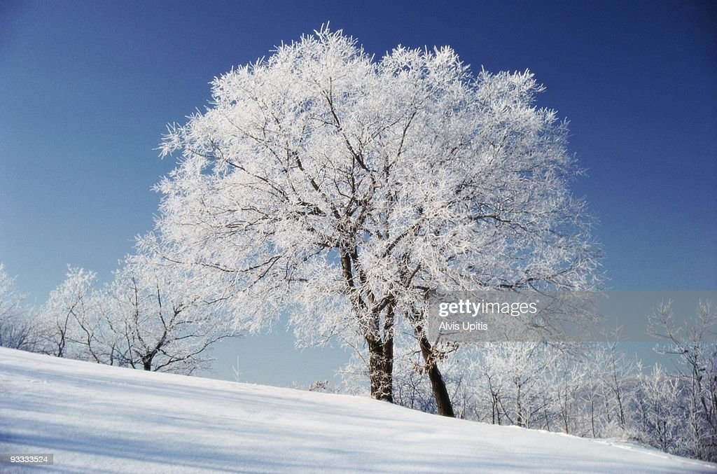 Tree and rural landscape in winter : Stock Photo