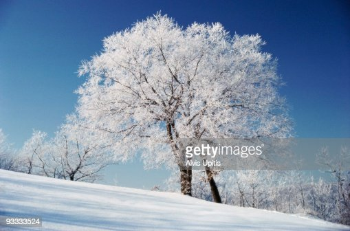 Tree and rural landscape in winter : Stockfoto
