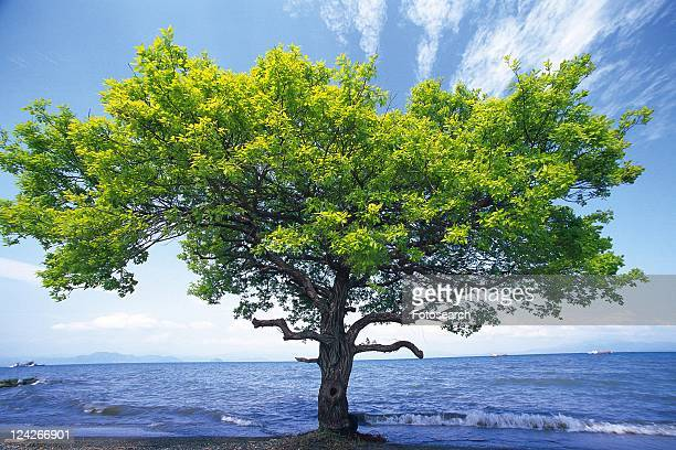 Tree and the Sea, Front View, Pan Focus