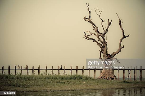 Tree and U Bein bridge