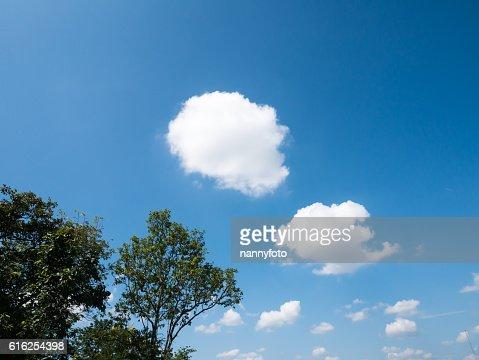 Tree ans sky : Stock Photo