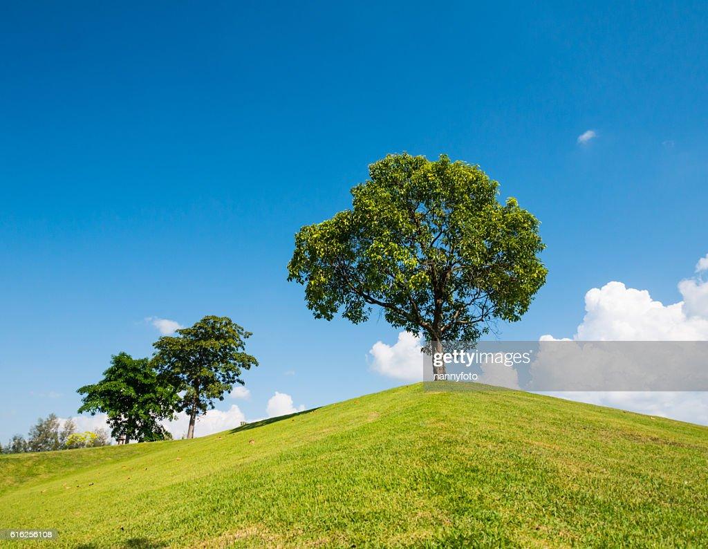 ans sky Tree : Foto de stock
