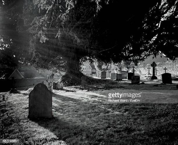 Tree At Cemetery