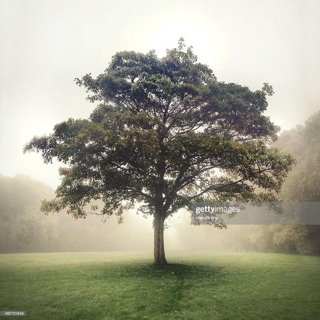 Tree at sunlight