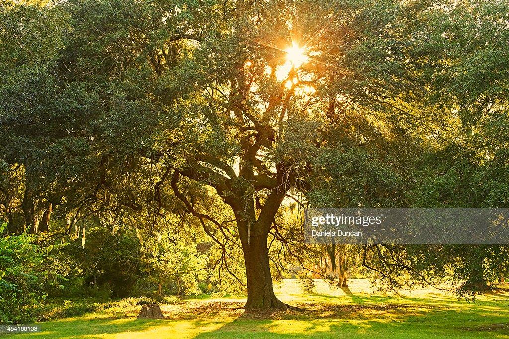 Tree at the Park : Stock Photo