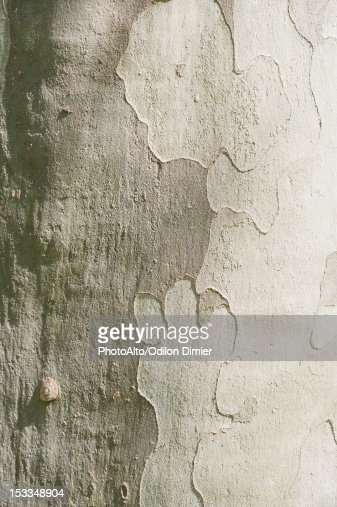Tree bark, full frame