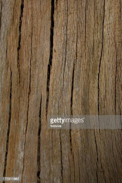 Tree Bark Lines