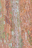 tree bark nature texture pattern wood background