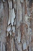Closeup of tree bark