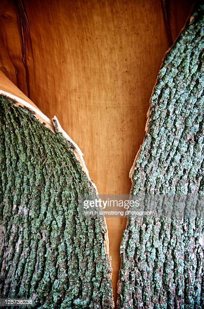 Tree bark split
