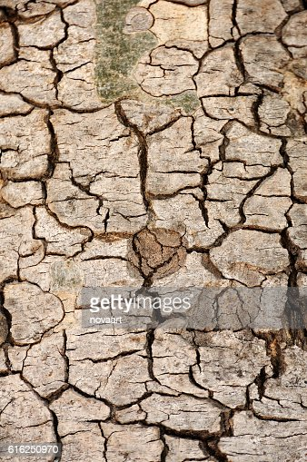 Tree bark texture for web background : Stock Photo