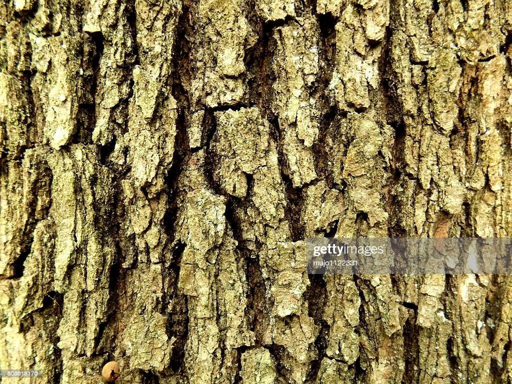 Tree bark texture : Stock Photo
