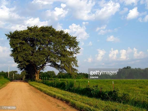 Tree & big blue sky