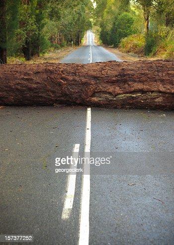 Tree Blocking the Road