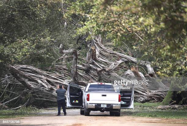A tree blocks a road after it was downed by winds from Hurricane Irma on September 11 2017 in Miami Florida Hurricane Irma made landfall in the...