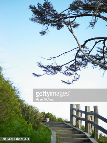 Tree branches over footpath : Stock Photo