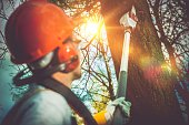 Tree Branches Pro Cutting. Unsafe Branches Removal by Extended Wood Cutter.