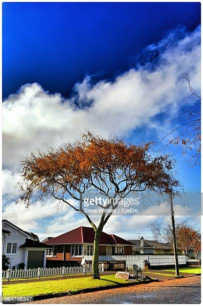 Tree By Houses Against Sky