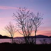 Tree by lake at sunset