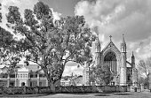 Tree By Old Churches Against Sky