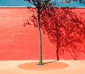 Tree by red wall