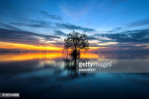 Albero al mare con la splendida mattina di sole. : Foto stock