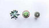 Tree pot cactus on white