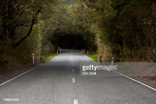 Tree canopied road in Milford Sound : Stock Photo